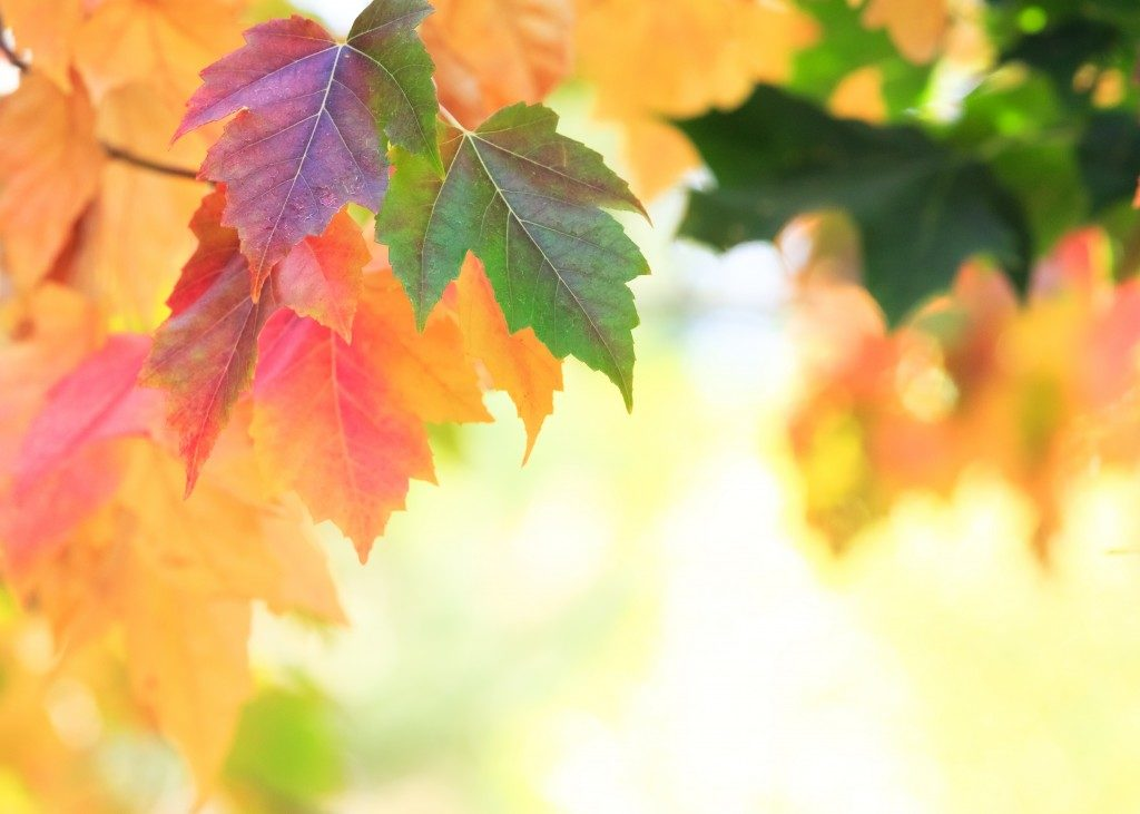 closeup shot of autumn leaves in the tree